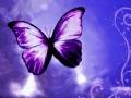 velvet buterfly
